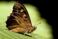 Oss-Marco-Farfalla